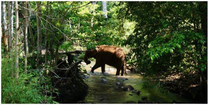 Modulkiri, Cambodia - an elephant center in the jungle